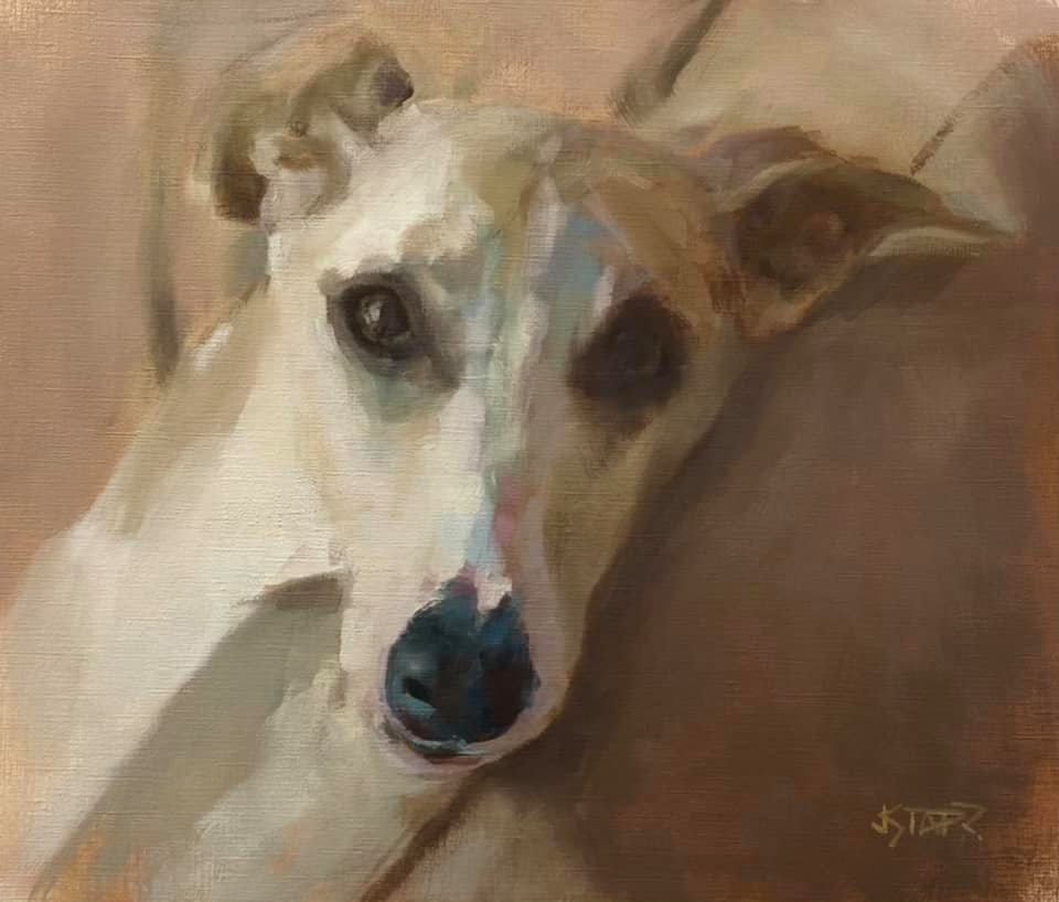"""Beautiful Whippet """"Willy"""""""